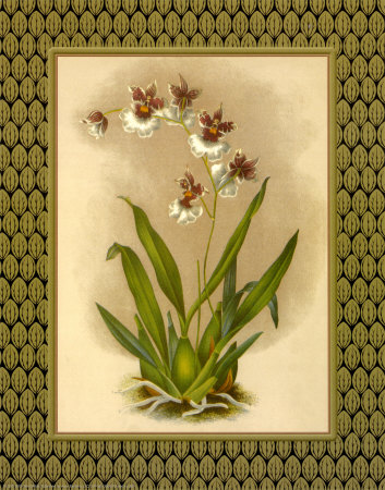Classic Orchids III Posters by Tara Wilde