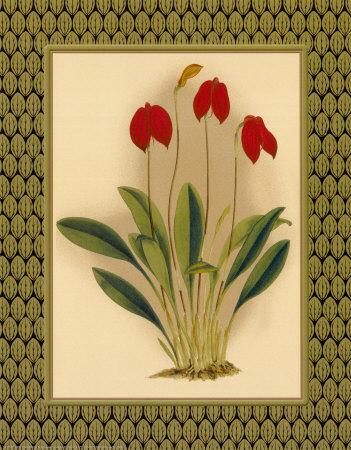 Classic Orchids II Prints by Tara Wilde