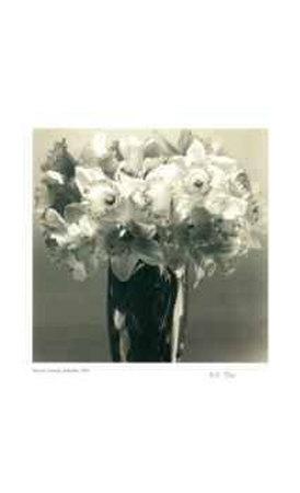 Daffodils Limited Edition by Adriene Veninger