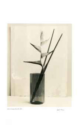 Floral 7 Collectable Print by Adriene Veninger