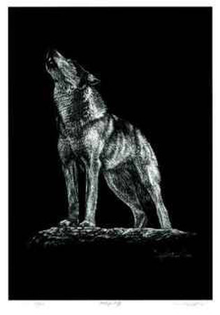 Howling Wolf Collectable Print by Robert Pow