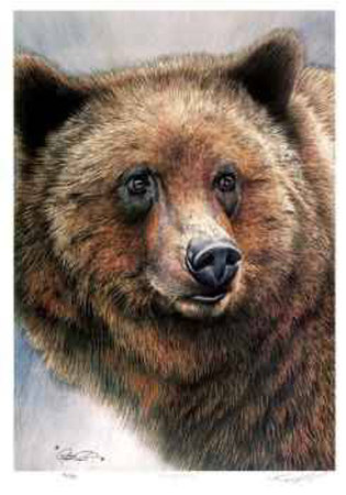 Grizzly Bear Collectable Print by Robert Pow