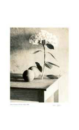 Still Life on Table Collectable Print by Adriene Veninger