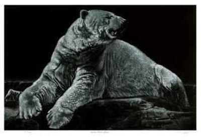 Male Polar Bear Limited Edition by Robert Pow