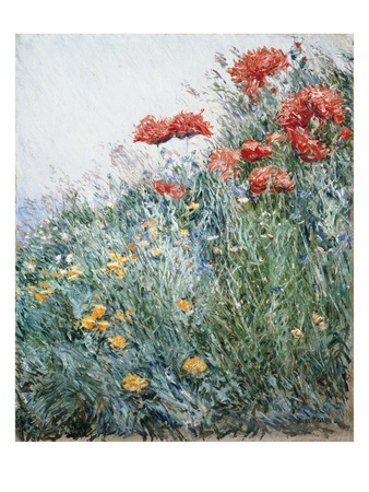 Poppies, Appledore Giclee Print