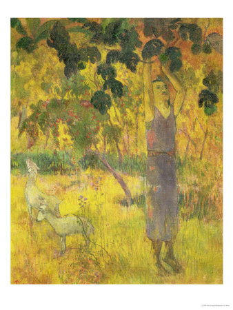 Man Picking Fruit from a Tree, 1897 Premium Giclee Print by Paul Gauguin