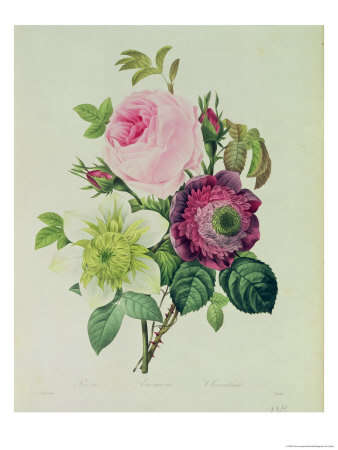 Rose, Anemone and Clematide Premium Giclee Print by Pierre-Joseph Redouté