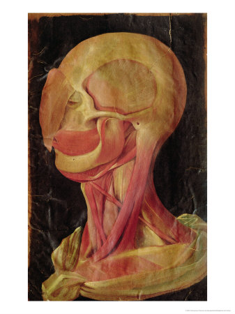 Anatomical Drawing of the Human Head Giclee Print by Hieronymus Fabricius ab Aquapendente