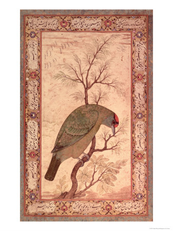 A Barbet (Himalayan Blue-Throated Bird) Jahangir Period, Mughal, 1615 Premium Giclee Print by Ustad Mansur