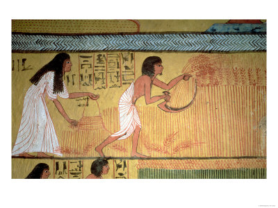 Detail of a Harvest Scene on the East Wall, from the Tomb of Sennedjem, the Workers' Village Premium Giclee Print