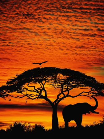 Elephant Under Broad Tree Fotoprint av Jim Zuckerman