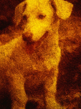Dog Photographic Print by Andre Burian