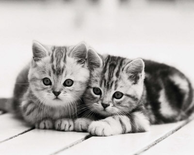 kittens. Two Kittens Prints at