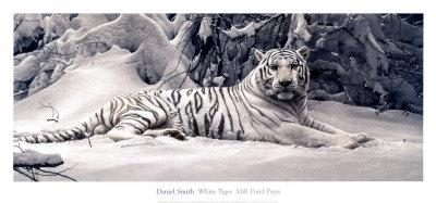 White Tiger Art by Daniel Smith