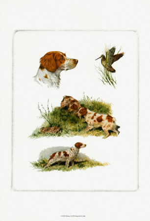 Brittany Prints by  Rial