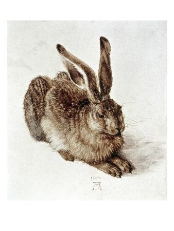 The Young Hare Giclee Print by Albrecht Dürer