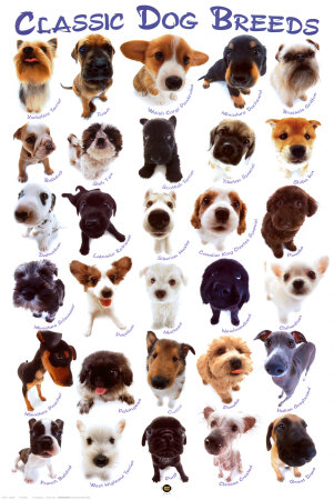 Dog Breeds Prints at