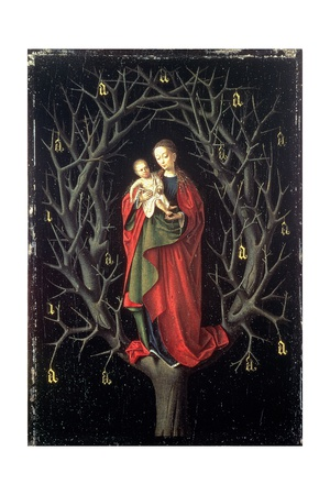 Our Lady of the Dry Tree C.1450 Giclee Print by Petrus Christus