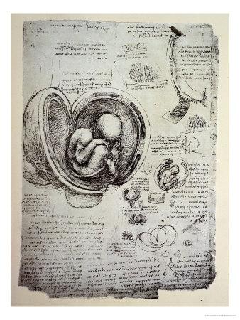 The Human Foetus in the Womb, Facsimile Copy Premium Giclee Print by  Leonardo da Vinci