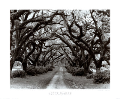 Path in the Oaks II, Louisiana Lámina