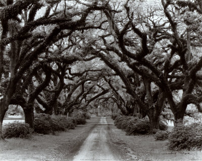Path in the Oaks II, Louisiana Art Print