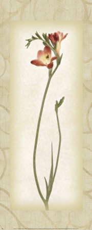 Blossom IV, Freesia Poster by Donna Geissler