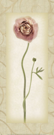 Blossom II, Ranunculus Posters by Donna Geissler