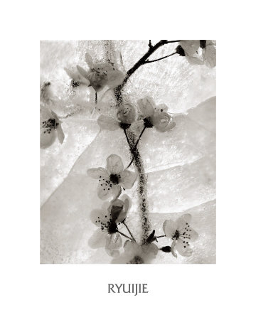 Cherry Blossoms in Winter Art Print