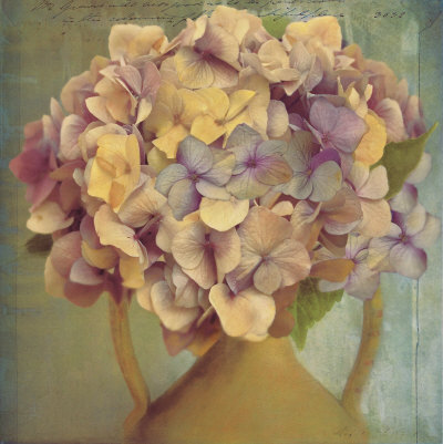 Lavender Hydrangea Prints by Sally Wetherby