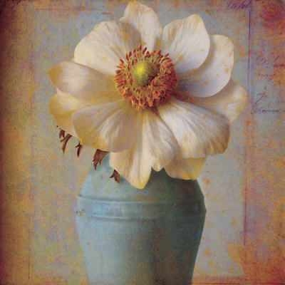 Floral Study II Prints by Sally Wetherby