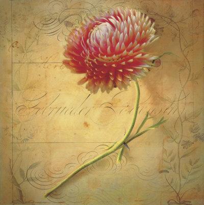 Little Strawflower Art by Sally Wetherby