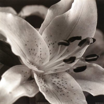 Speckled Lily Art Print