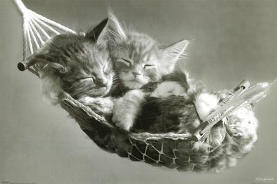 Kätzchen in der Hängematte Poster von Keith Kimberlin