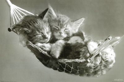 Kittens In A Hammock Poster