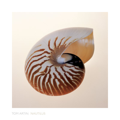 Nautilus Lmina