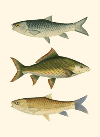Antique Fish I Prints by Ernest Briggs
