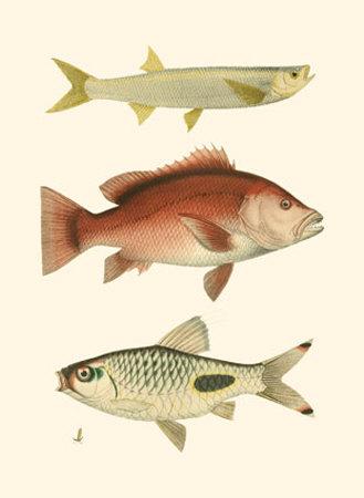 Antique Fish II Print by Ernest Briggs