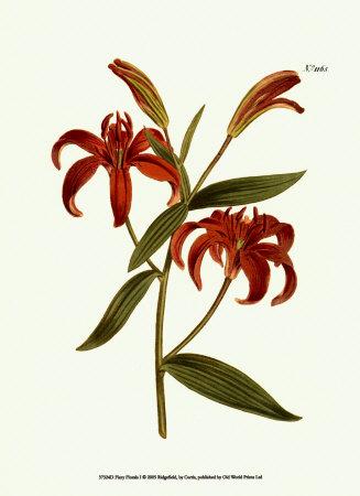Fiery Florals I Poster von Samuel Curtis