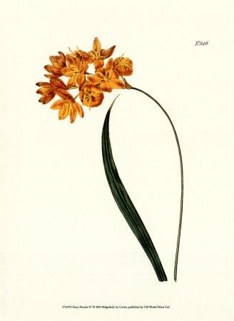 Fiery Florals IV Kunstdrucke von Samuel Curtis