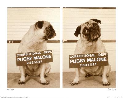 Pugsy Malone Art by Jim Dratfield