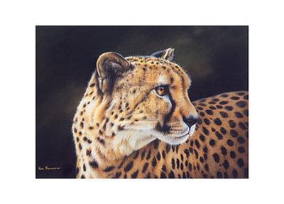 Cheetah Art by Kim Thompson