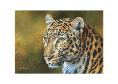 Leopard Posters by Kim Thompson
