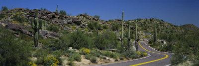 Road Through the Desert, Phoenix, Arizona, USA Photographic Print by  Panoramic Images
