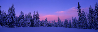 Forest in Winter, Dalarna, Sweden Photographic Print by  Panoramic Images