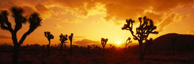 Sunset, Joshua Tree Park, California, USA Photographic Print by  Panoramic Images