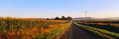 Road Along Rural Cornfield, Illinois, USA Photographic Print by  Panoramic Images
