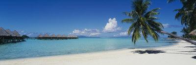 Palm Tree on the Beach, Moana Beach, Bora Bora, Tahiti, French Polynesia Photographic Print by  Panoramic Images