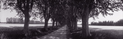 Road Through Trees, Provence, France Photographic Print by  Panoramic Images