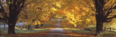 Road, Baltimore County, Maryland, USA Photographic Print by  Panoramic Images