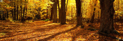 Tree Lined Road, Massachusetts, USA Photographic Print by  Panoramic Images
